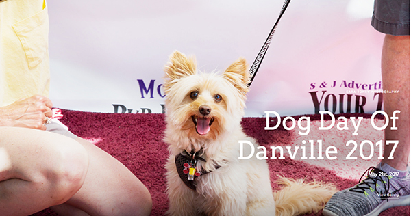 Dog Day of Danville