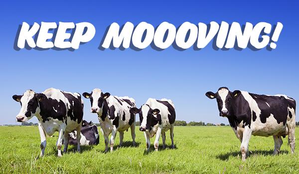 Keep Moooving