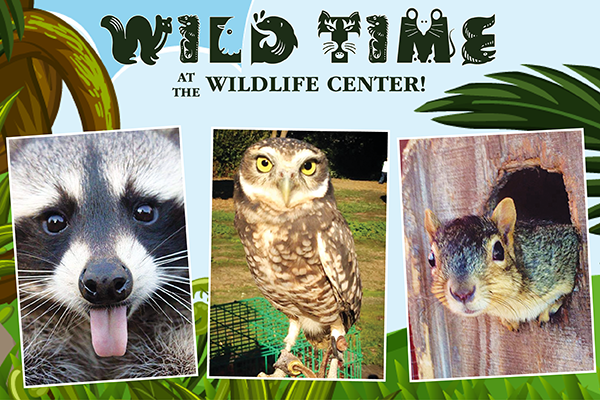 wild time suisun wildlife
