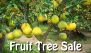winters fruit tree