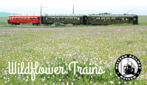 wildflower trains in suisun