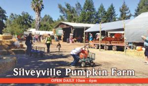 silveyville pumpkin farm