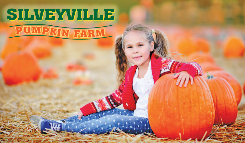 silveyville pumpkin farm